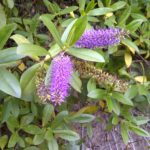 BlackBerry Torch 9860 - Foto