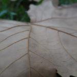 Foto macro